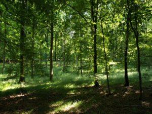 Klassisches Waldbaden @ Groß Vollstedt