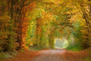 Naturkundliche Herbstwanderung zum Kieler Berg bei Groß Vollstedt