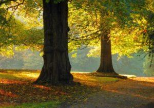 Naturkundliche Herbstwanderung im Gutspark Bossee