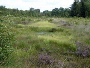 Naturkundliche Wanderung im Fockbeker Moor