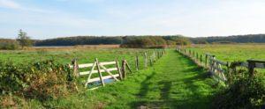 Wanderung im Naturschutzgebiet Ahrensee