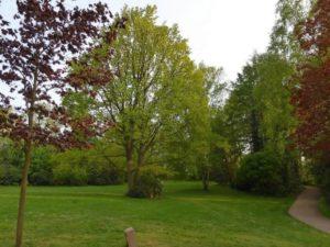 Herbstwanderung im Nortorfer Stadtpark @ Stadtpark Nortorf