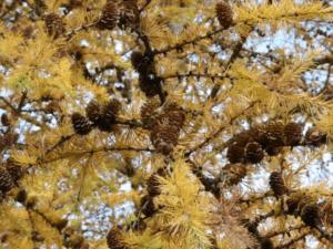 Herbstwanderung auf den Kieler Berg bei Groß Vollstedt @ Wald bei Groß Vollstedt