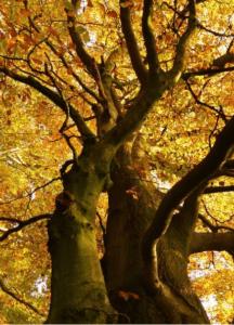 Herbstwanderung im Gutspark Bossee @ Westensee